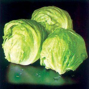 lettuce-emperor