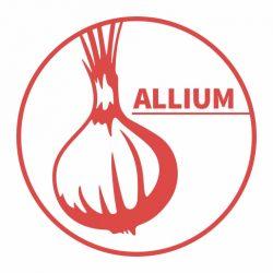Allium - logo - 512px