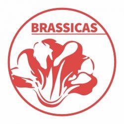 Brassicas - logo - 512px