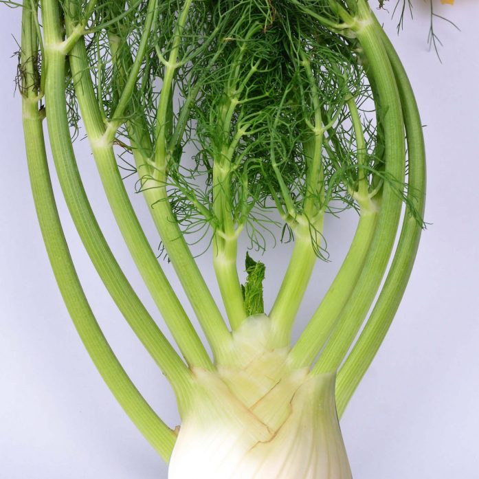 Fennel - for web