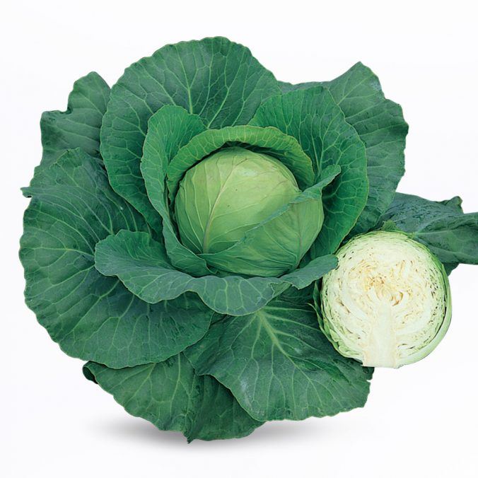 SCORPIO cabbage_thumnail for web page