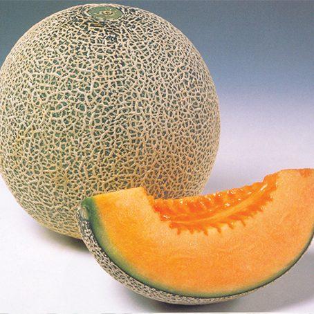 melon glamour -web